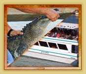 Combo pack includes Everglades tour plus Biscayne Bay boat tour